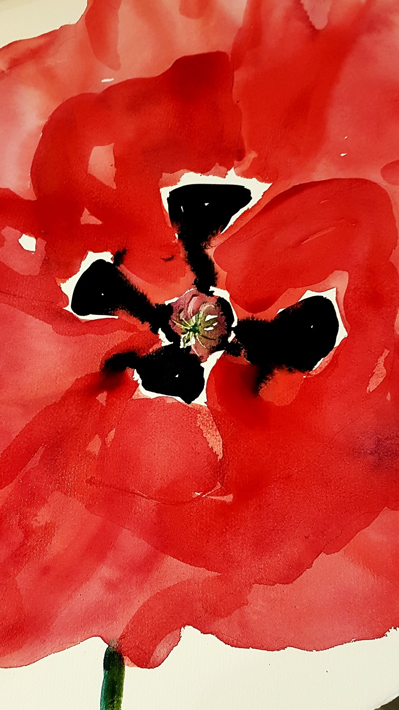 Poppy Flower Watercolour Paintings for Sale
